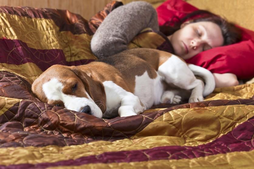 I benefici di dormire con il proprio cane o gatto