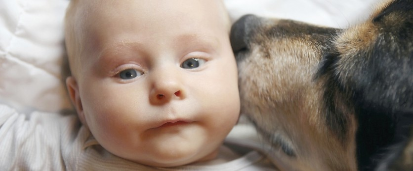 Cani e neonati: una convivenza vantaggiosa