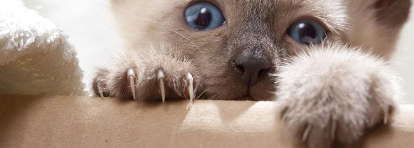 Come prevenire i danni da graffio di gatto