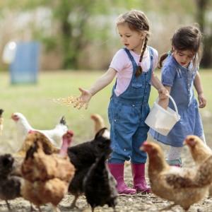 Vivere in fattoria riduce il rischio di allergia