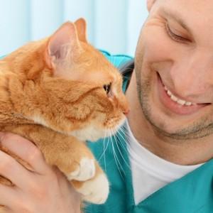 Le principali malattie del cane e del gatto