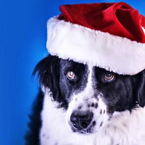 A Natale ci piace pensare a cani e gatti senza famiglia