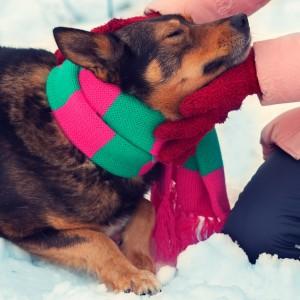 Il freddo è il peggior nemico delle articolazioni del cane