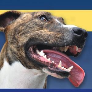 Malattia parodontale nel cane: ecco i numeri