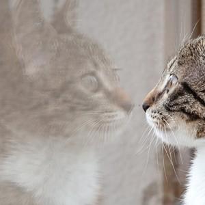 La vita del gatto dentro e fuori casa