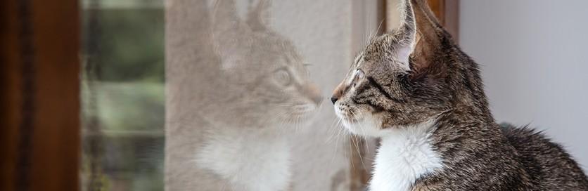 La vita del gatto dentro e fuori casa innovet for Stili di casa americana dispensa