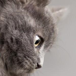 Nicotina nel pelo dei gatti esposti al fumo passivo