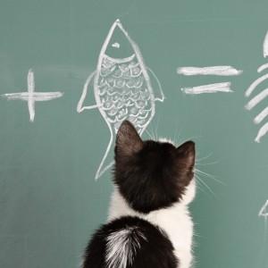 La memoria intelligente del gatto
