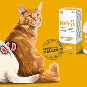 Nefrys®. L'innovazione per la salute del rene