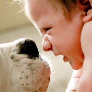Vivere con un cane protegge da allergie e obesità