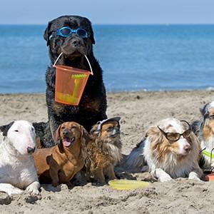 Spiagge dog-friendly per un'estate a quattro zampe