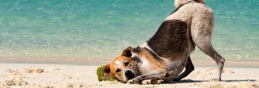 Diarrea del cane: un fastidioso problema estivo
