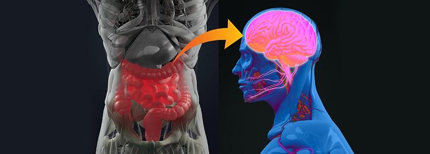 Gli antibiotici alterano l'asse intestino-cervello