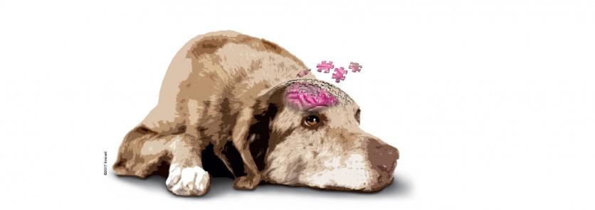 Il primo manuale sulla demenza senile di cani e gatti