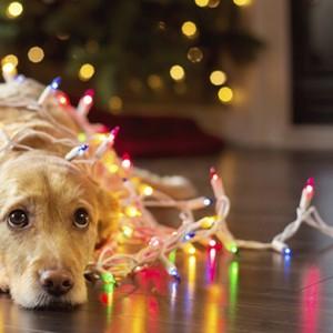 Un Natale sicuro per cani e gatti
