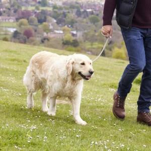 Trattamento del dolore da artrosi del cane, un nuovo studio