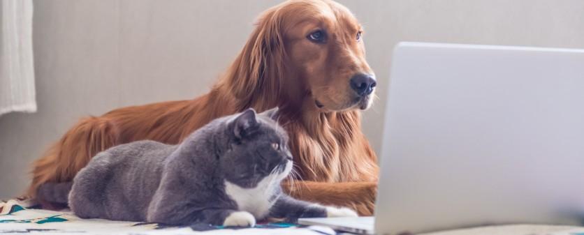 Cani più intelligenti dei gatti