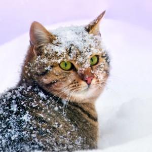 I pericoli dell'inverno per cani e gatti