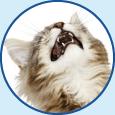 cucciolo_gatto