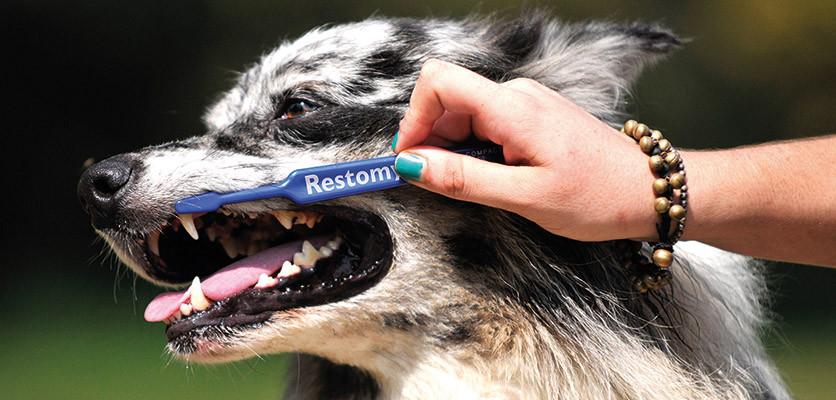 Nuove regole di prevenzione orale nei pet