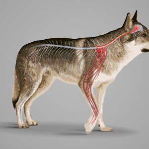 Nasce un centro specialistico per la cura del dolore animale