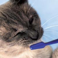 Parte dall'igiene orale la salute dei reni del gatto