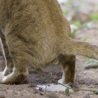 Urys per il benessere delle basse vie urinarie del cane for Urys gatto