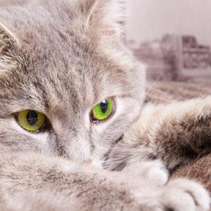 """Il gatto: un animale trattato """"da cani"""""""