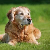 Artrosi del cane, una soluzione vincente