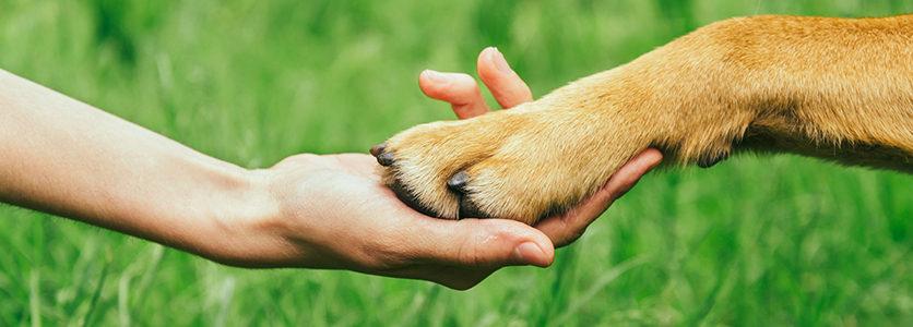 I cani ci parlano a gesti