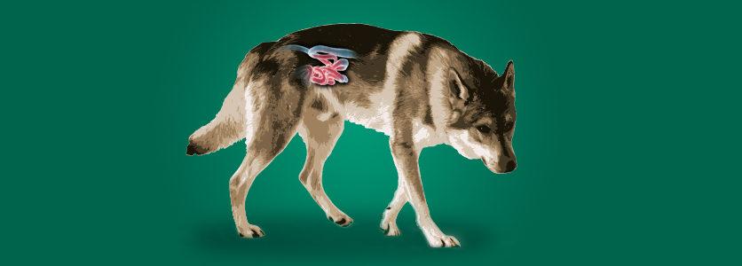 Colon irritabile? Ne soffrono anche i cani