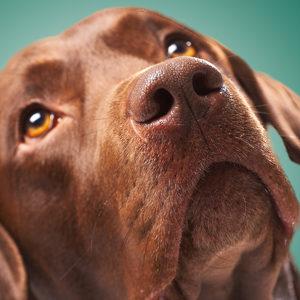 Settembre: mese del dolore animale