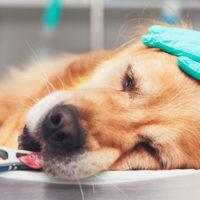 La PEA per alleviare il dolore nei pazienti terminali