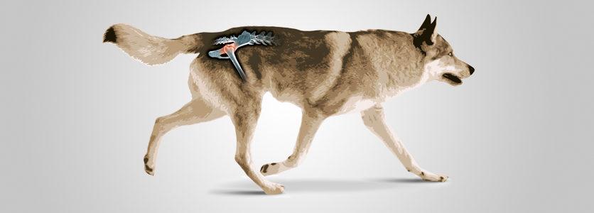 Una giornata dedicata al cane displasico