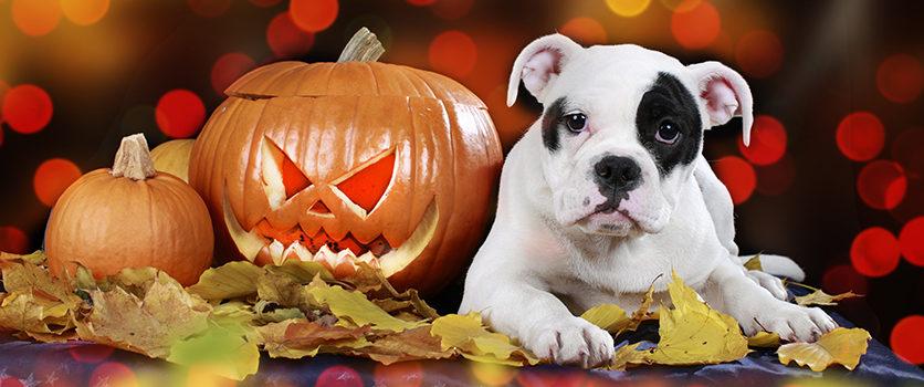 Ad Halloween attenzione speciale ai nostri quattro zampe