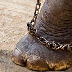 A Natale il circo senza animali