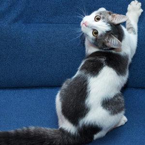 Giù le unghie dal mio divano!
