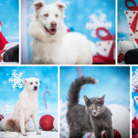 Calendario dell'Avvento: oltre 2000 pasti donati a cani e gatti sfortunati.