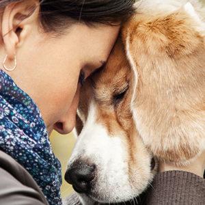 Dolore cronico del cane