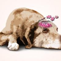Dolore cronico o demenza senile?