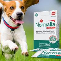 Normalia® Extra: è arrivato il normalizzatore intestinale extra-ordinario