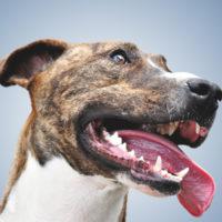 Salute orale di cani e gatti: dall'America nuove linee guida veterinarie