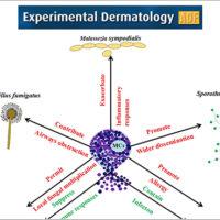 Infezioni fungine: chiarito il ruolo dei mastociti