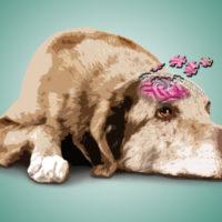Demenza senile nel cane: il vero e il falso