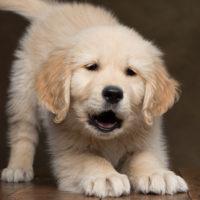 Condrogen® Energy per la salute articolare del cucciolo