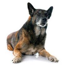Cane anziano affetto da ridotta mobilità