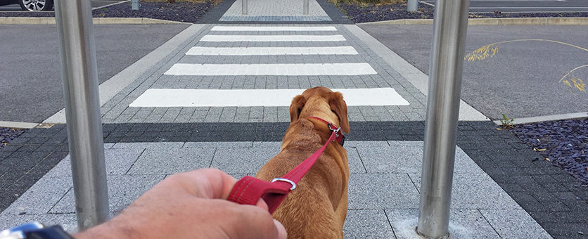 Se cani e gatti restano in città…
