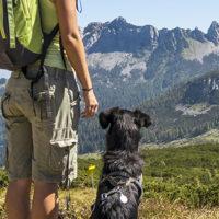 Montagna, vacanze sicure con Fido