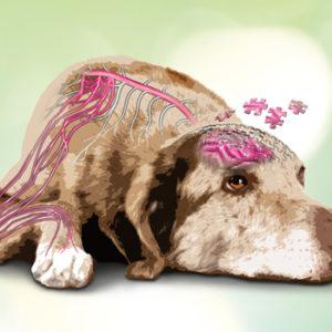 Senior Winter Tour: un ciclo di eventi dedicato al cane anziano