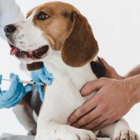Dall'America le nuove linee guida di salute per cani di ogni età